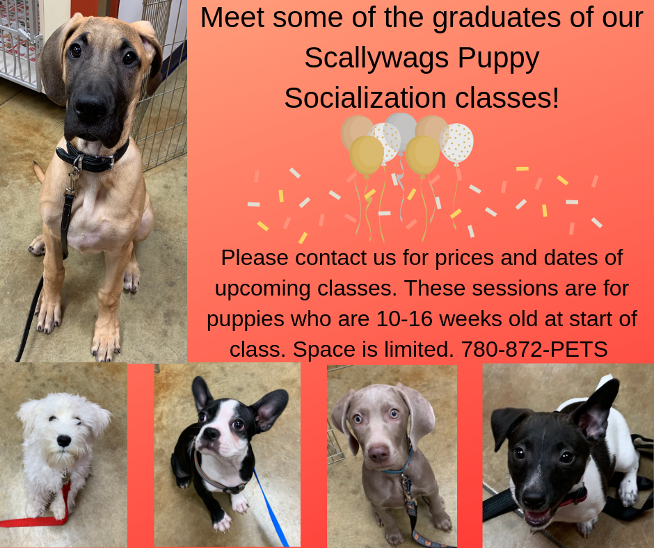 Obedience & Puppy Classes – Southside Veterinary Clinic